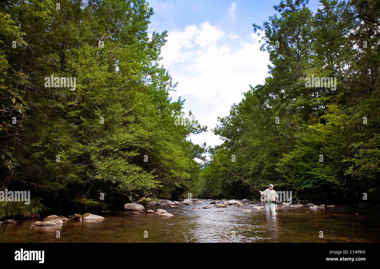 Man long casting in the Greenbrier River, Smoky Mountain National Park. - Stock Image