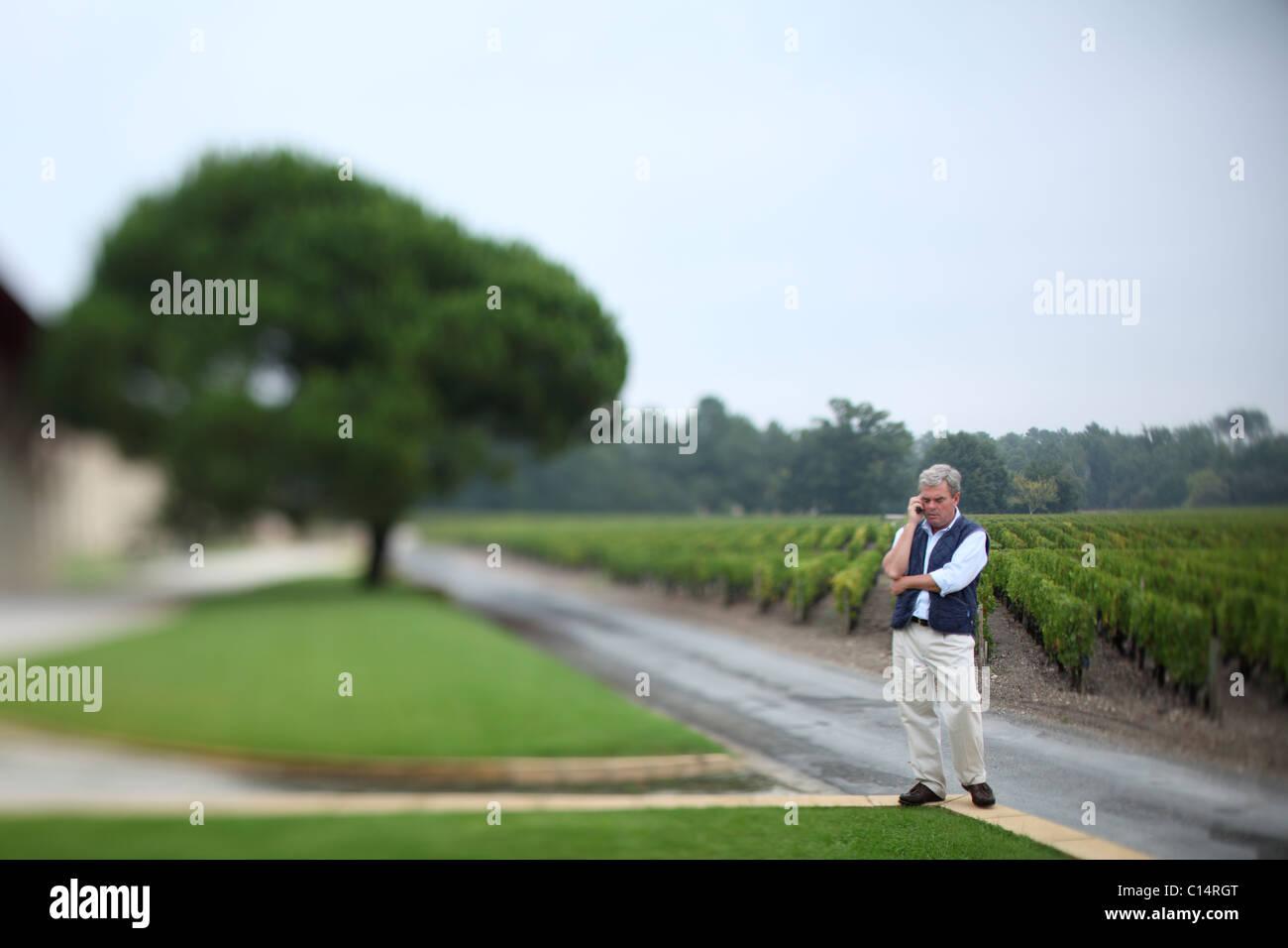 Bordeaux vineyard - Stock Image