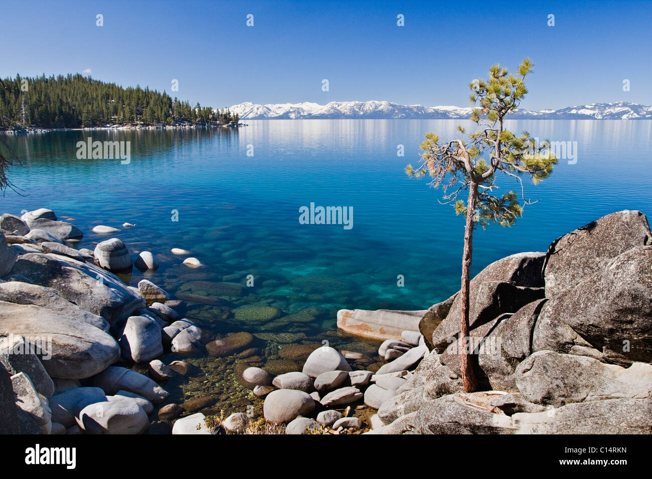 A lone pine tree on the rocky shore of Lake Tahoe in Nevada - Stock Image