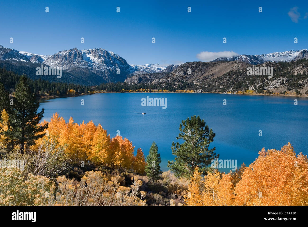 Yellow fall aspen trees with snowy mountians and June Lake in the Sierra mountains of California - Stock Image