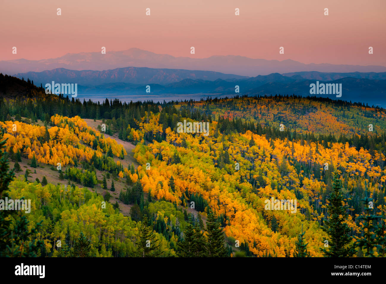 Aspen trees and mountains.  Westcliffe, Colorado. - Stock Image