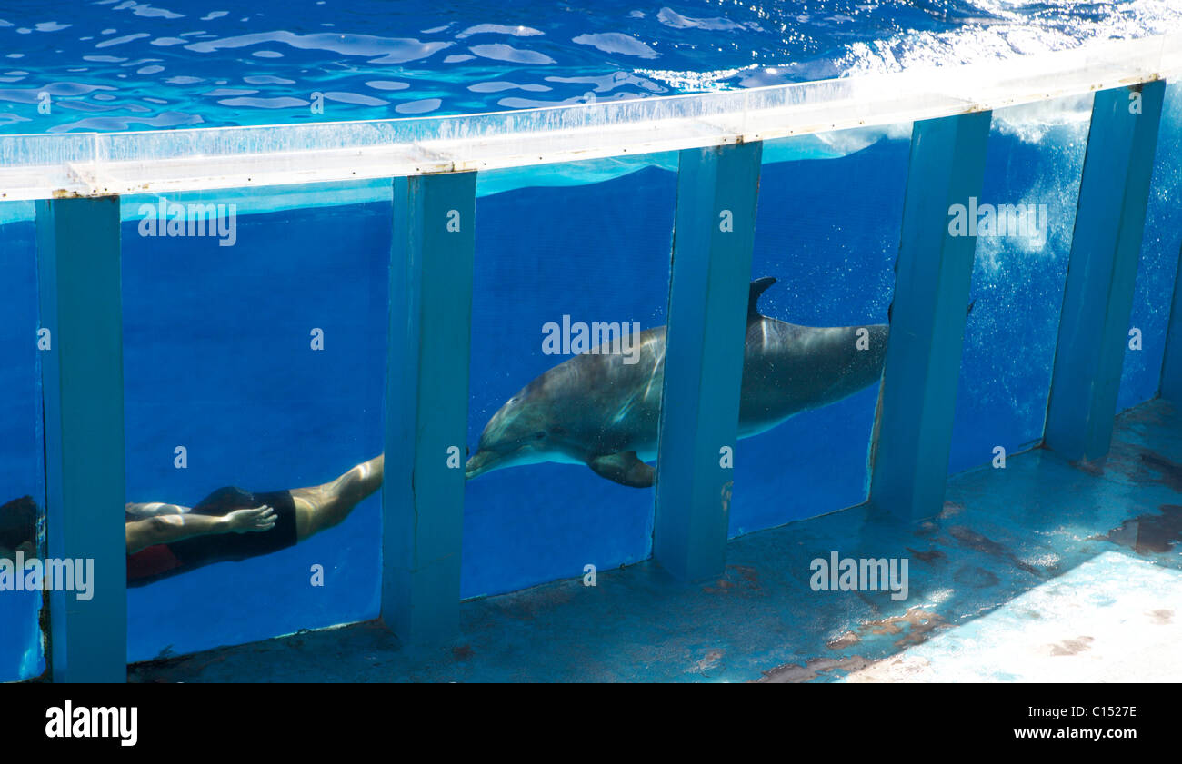 Zoo Marine in Albufeira Portugal dolphin show Stock Photo
