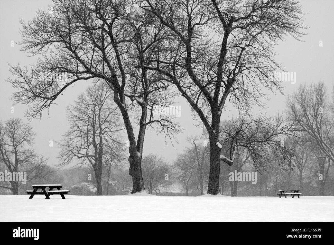 Two trees stand at attention during a winter snowstorm. - Stock Image