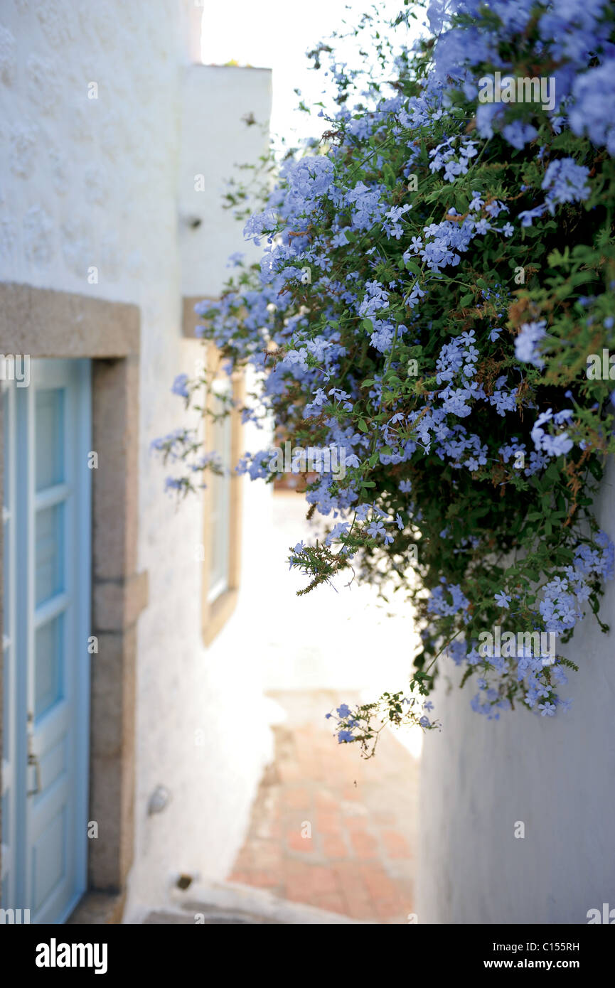 A flowering alley in white gleaming Hora, Patmos. - Stock Image