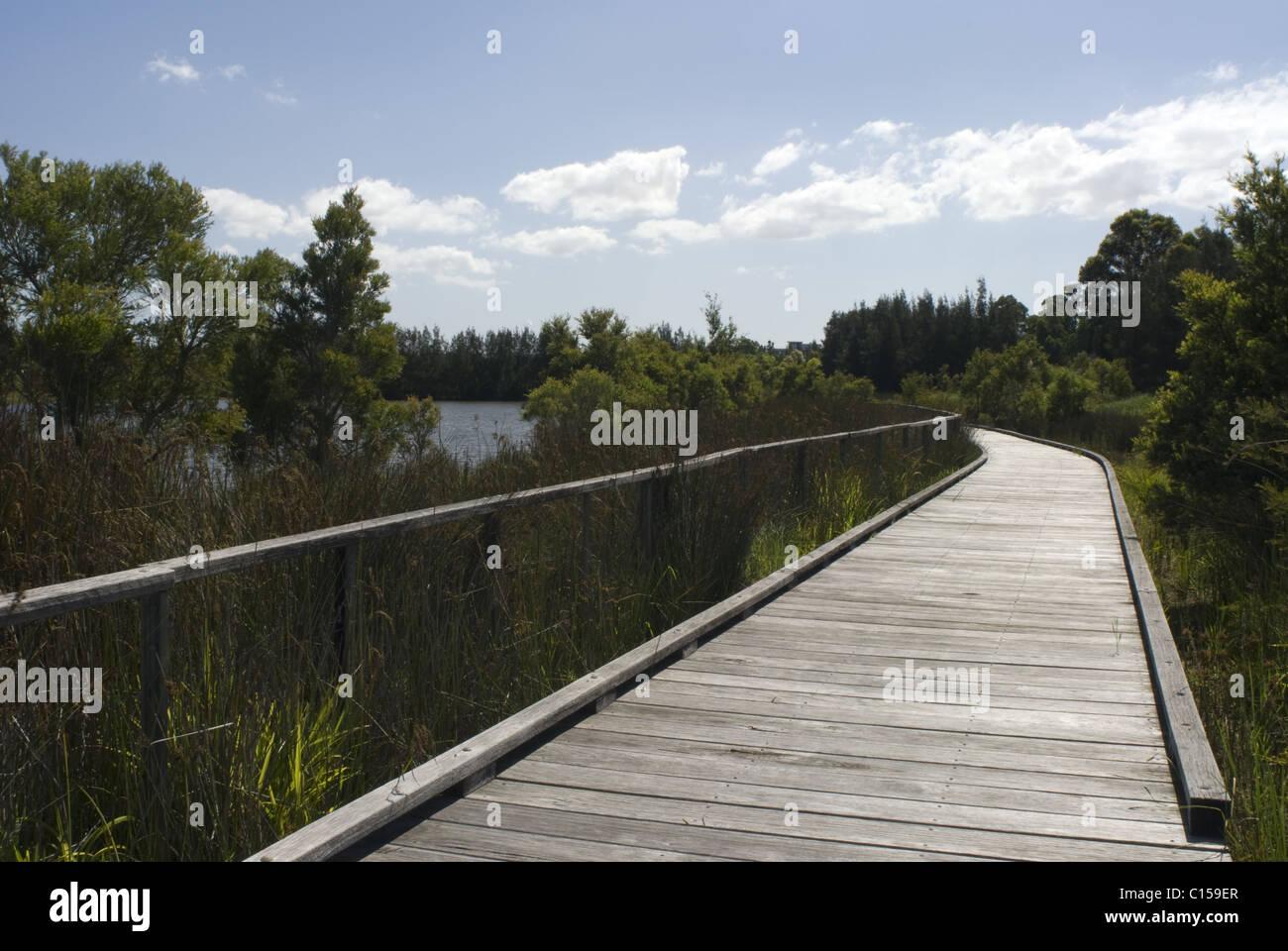 The boardwalk through the mangroves, Bicentennial Park, Homebush, Sydney, NSW, Australia - Stock Image