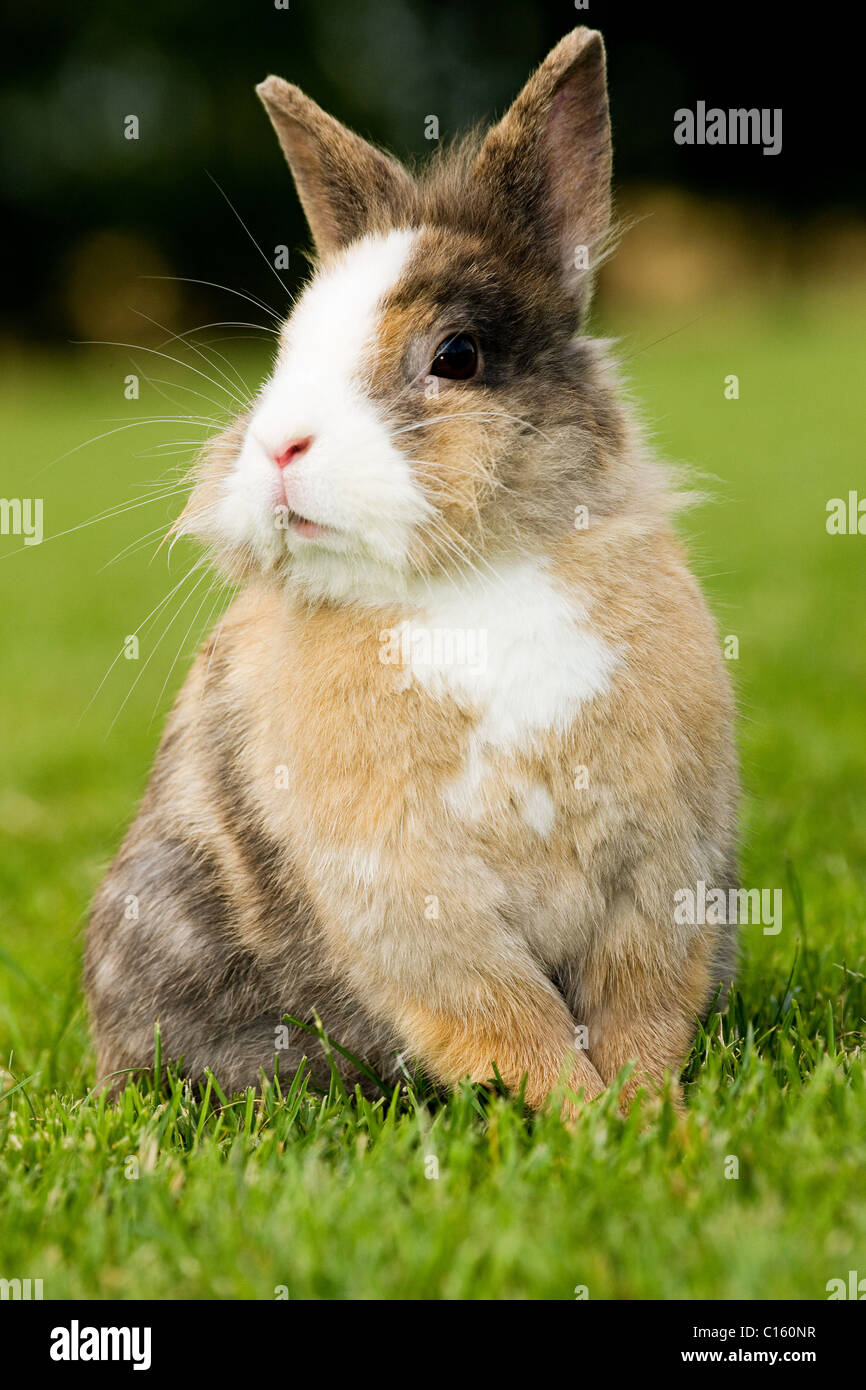 One rabbit sitting on grass - Stock Image