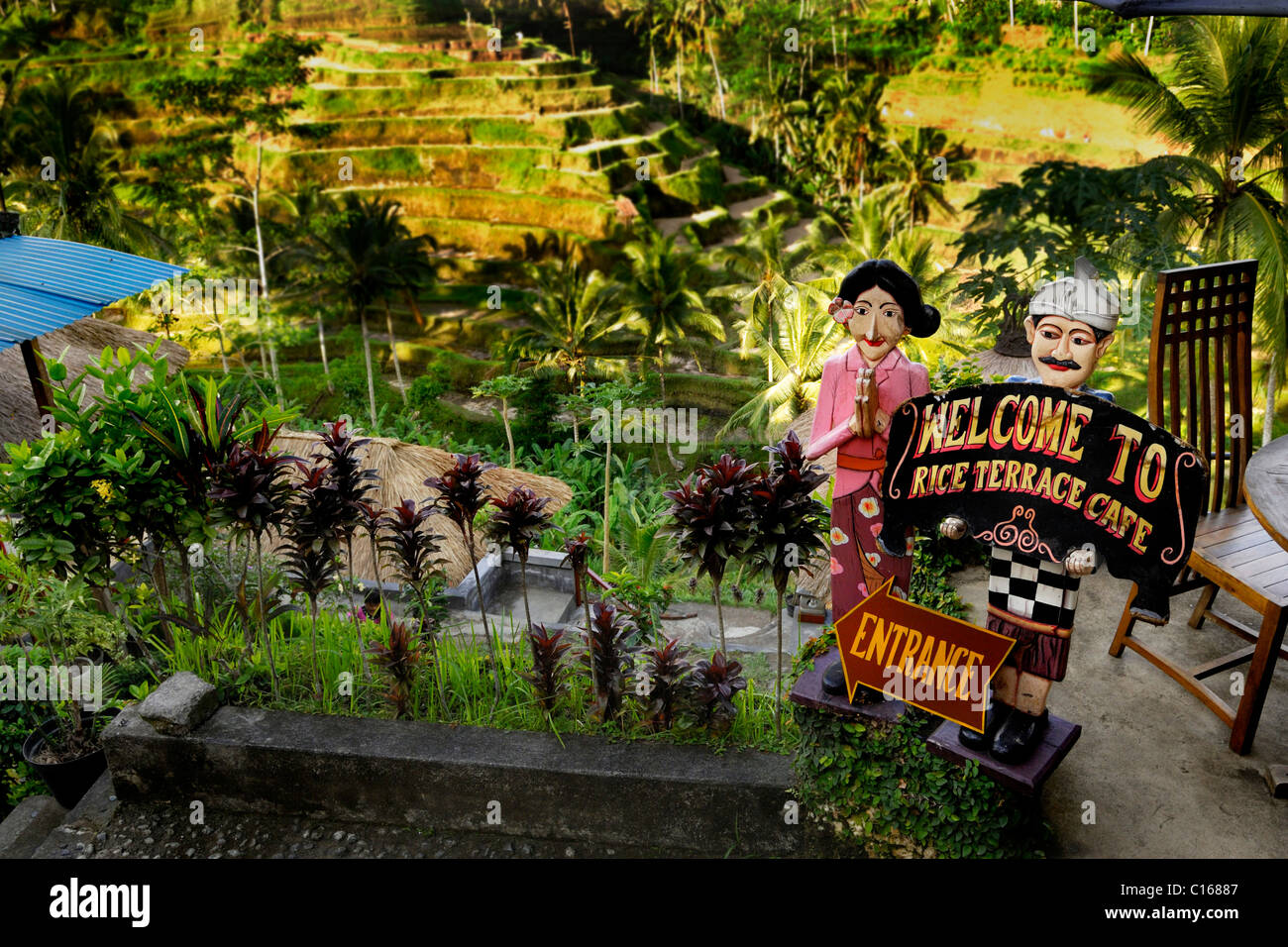 Rice terraces and advertisements for coffee near Ubud, Bali, Indonesia, Asia - Stock Image