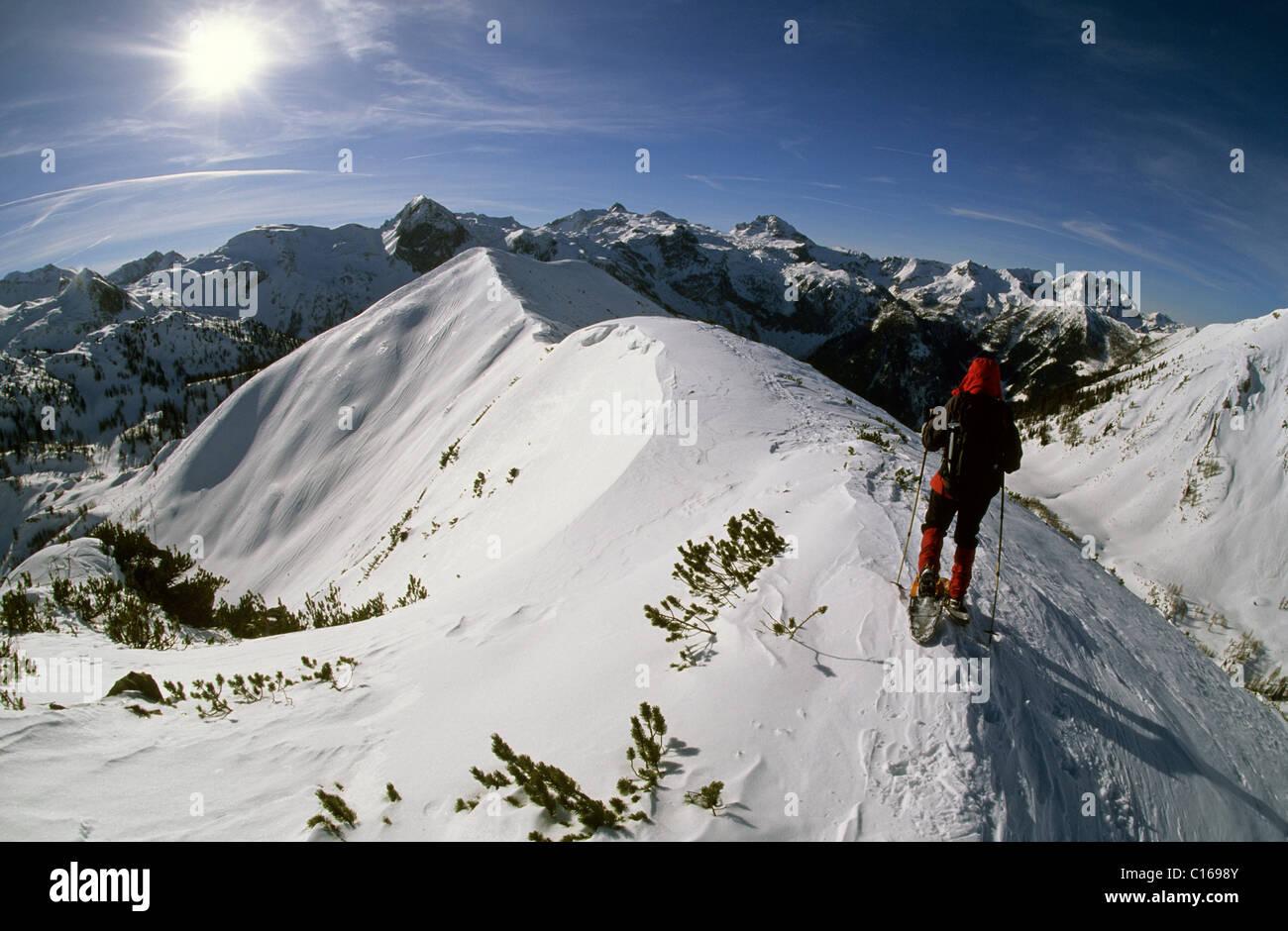 Woman in snowshoes on the summit chine of Mt. Spirzing, 2066m, Suedwiener Hut, Radstaedter Tauern Range, Salzburg, - Stock Image