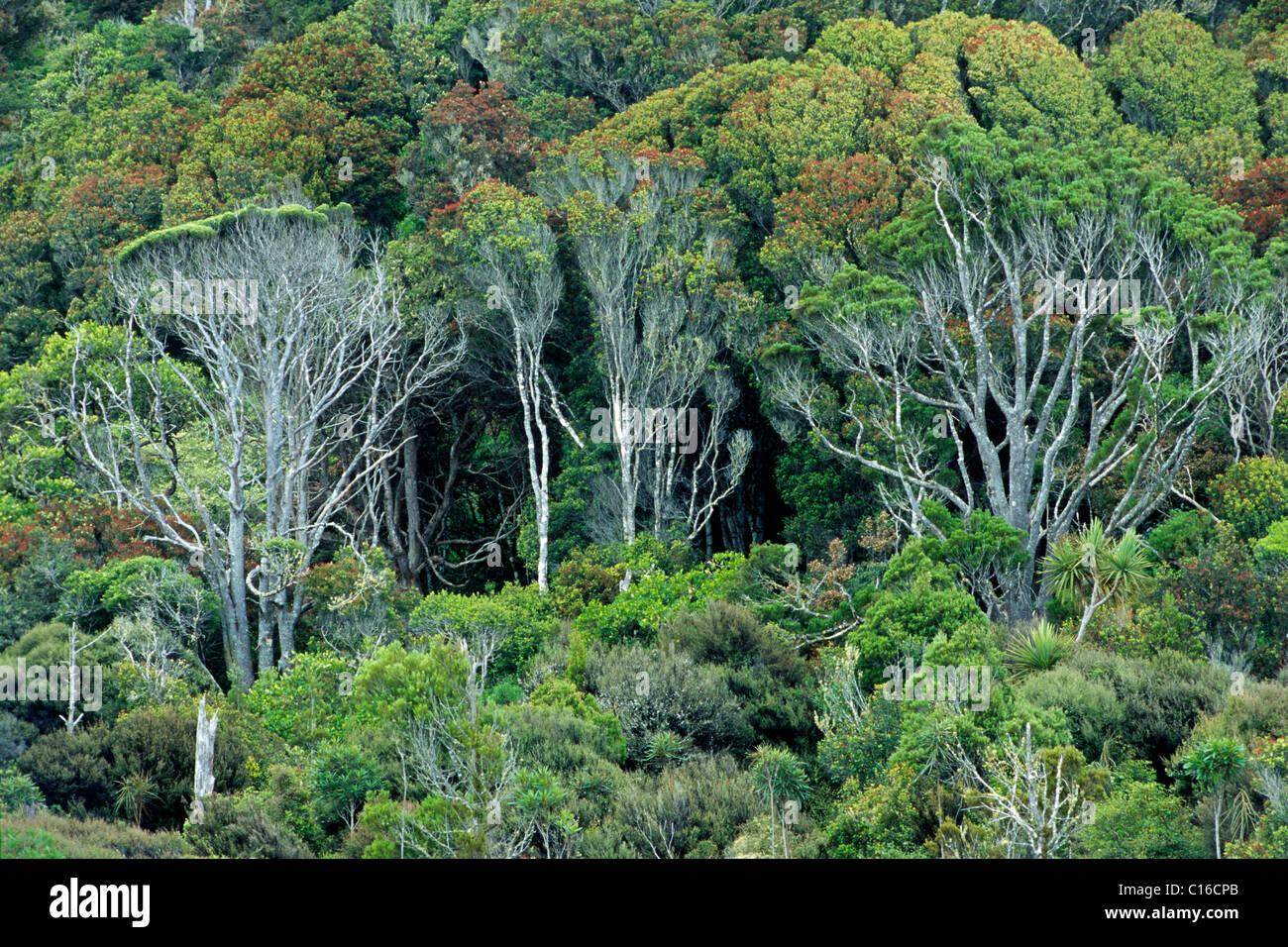 Coastal vegetation, South Island, New Zealand - Stock Image