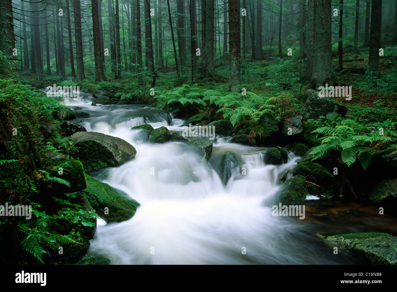 Kleine Ohe forest stream in the Bavarian Forest National Park, Bavaria, Germany, Europe - Stock Image