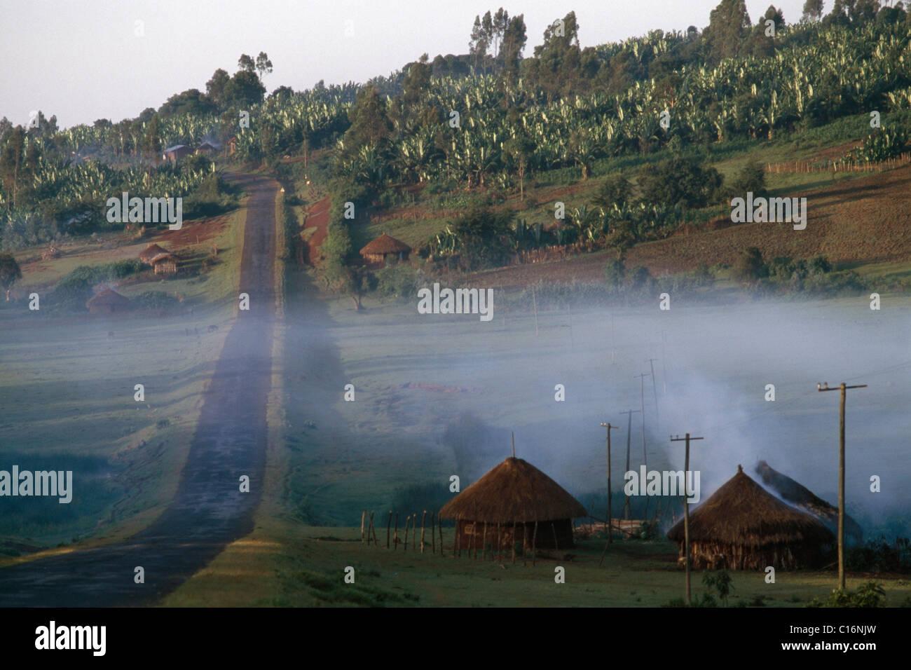 Banana plantation, Awasa, highlands, Ethiopia, Africa - Stock Image