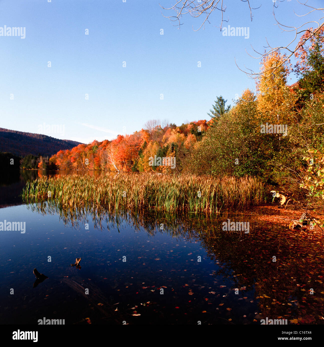 Autumnal coloured trees, Indian summer, New England, USA Stock Photo