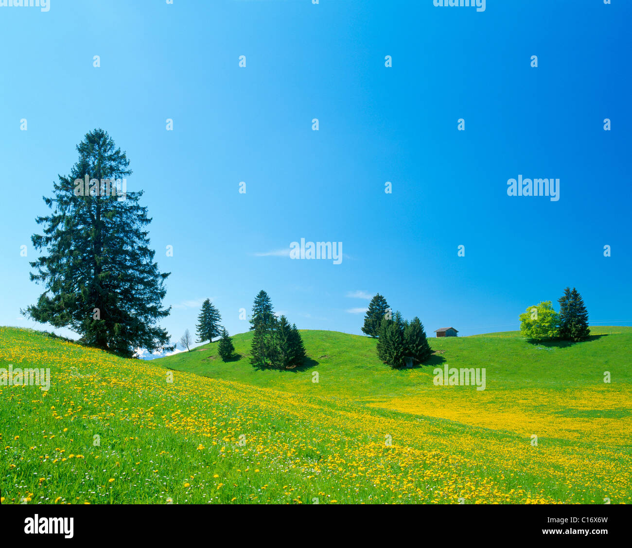 Landscape near Fuessen, spring, east Allgaeu, Bavaria, Germany, Europe Stock Photo