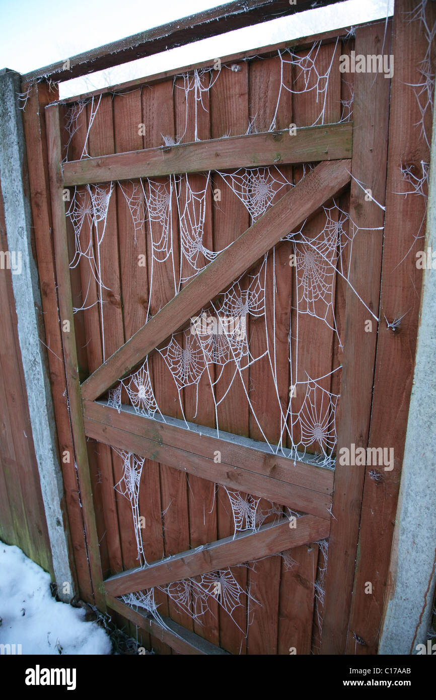 spiders webs on a gate covered in hoar frost, England, Winter 2010 - Stock Image