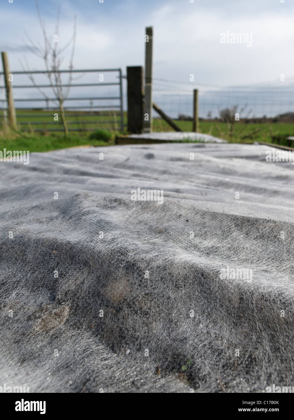 Horticultural fleece covering a raised vegetable bed. Lincolnshire, England. - Stock Image