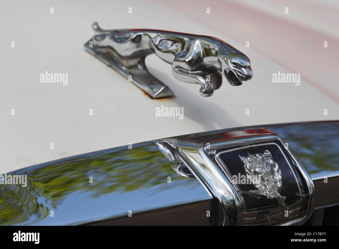jaguar logos stock photos jaguar logos stock images alamy