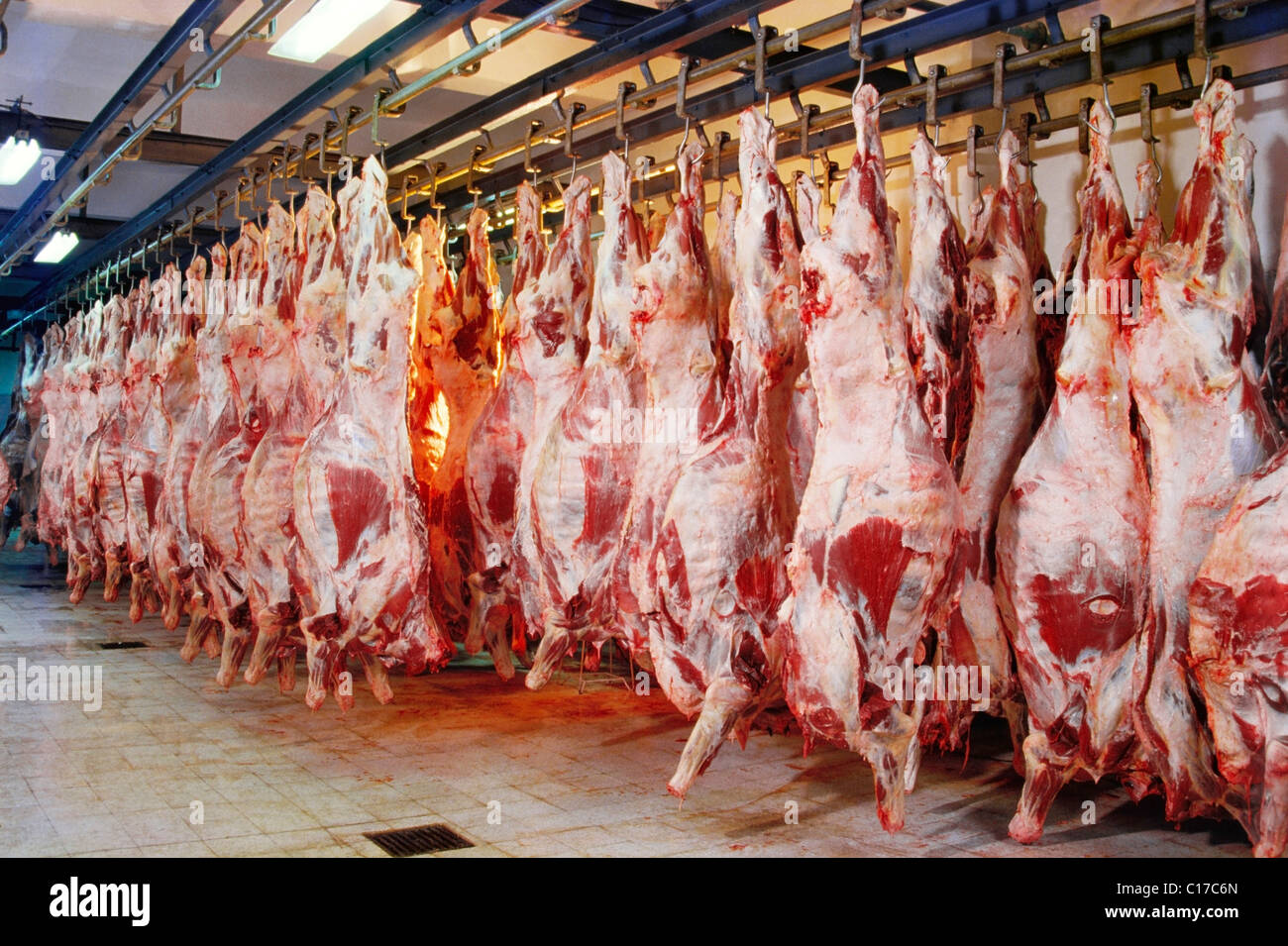 HMA-61314 : Slaughter house ; India - Stock Image