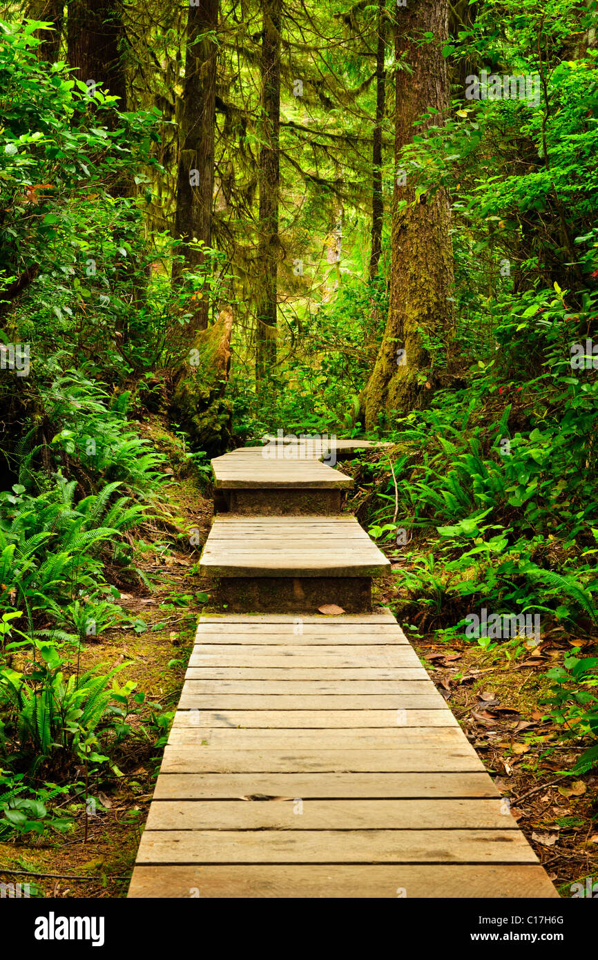 Wooden path through temperate rain forest. Pacific Rim National Park, British Columbia Canada Stock Photo