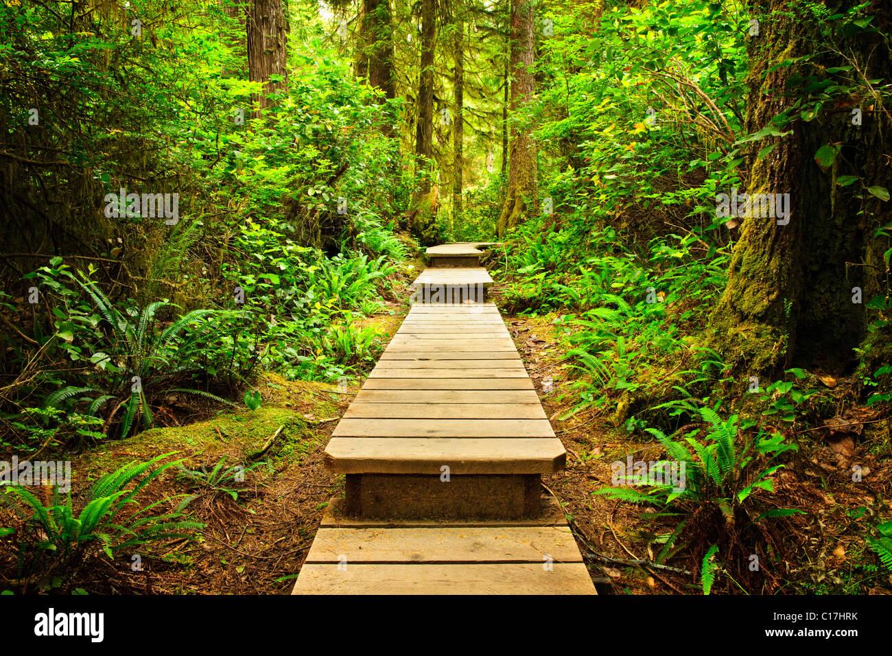 Wooden path through temperate rain forest. Pacific Rim National Park, British Columbia Canada Stock Photo