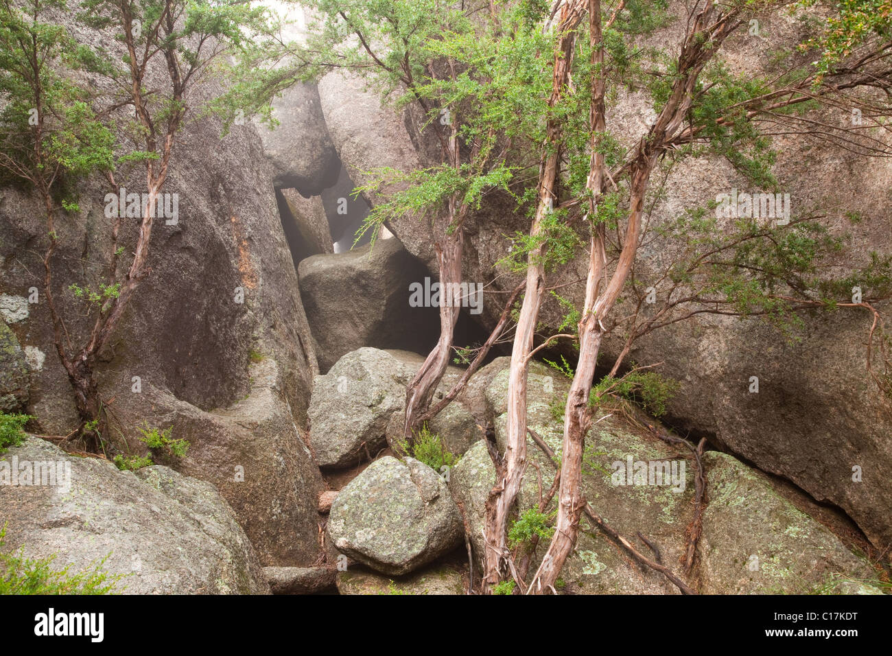Chalwell Galleries, Mount Buffalo National Park, Victoria, Australia - Stock Image