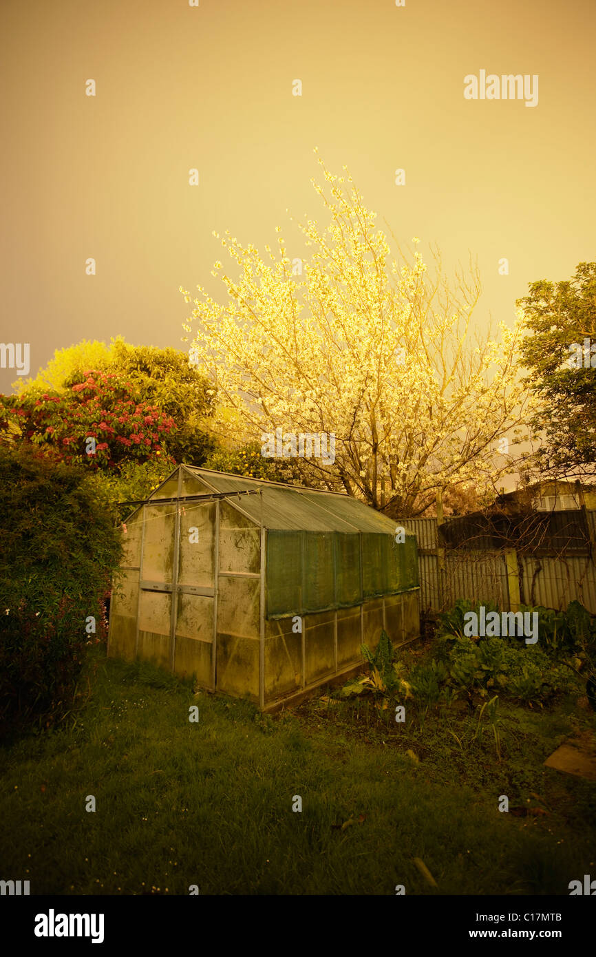 Night garden. Long exposure at dusk of back garden with greenhouse. - Stock Image