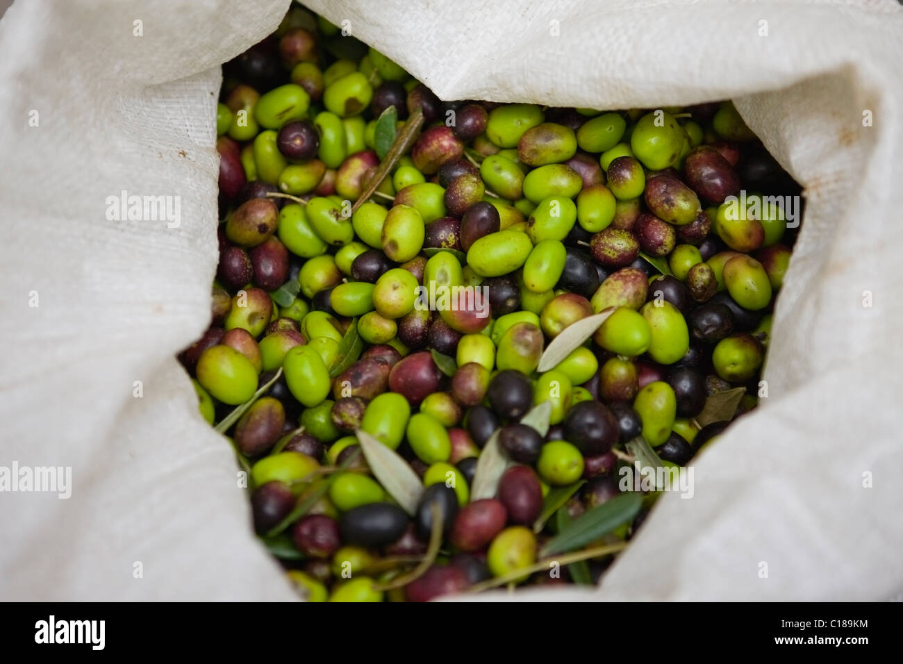 Bag filled with fresh olives - Stock Image