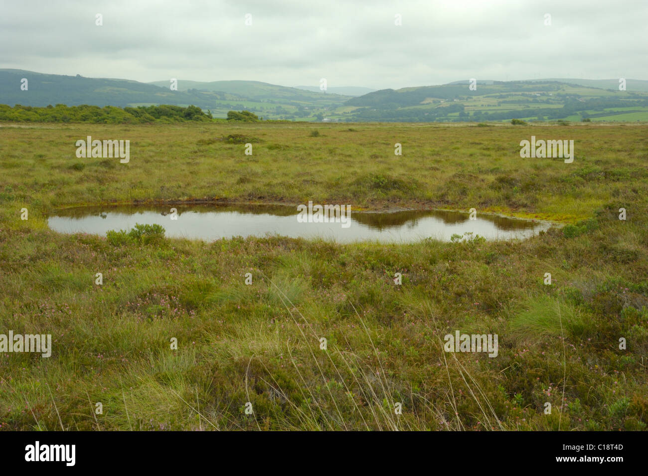 Pool at Cors Fochno - Stock Image