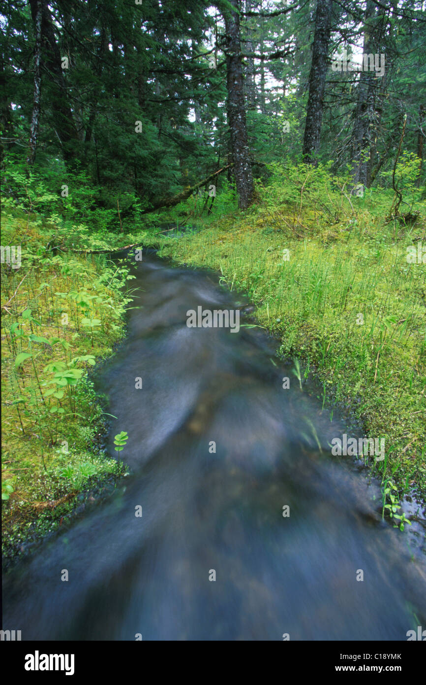 Stream flowing through Girdwood Alaska summer scenic - Stock Image