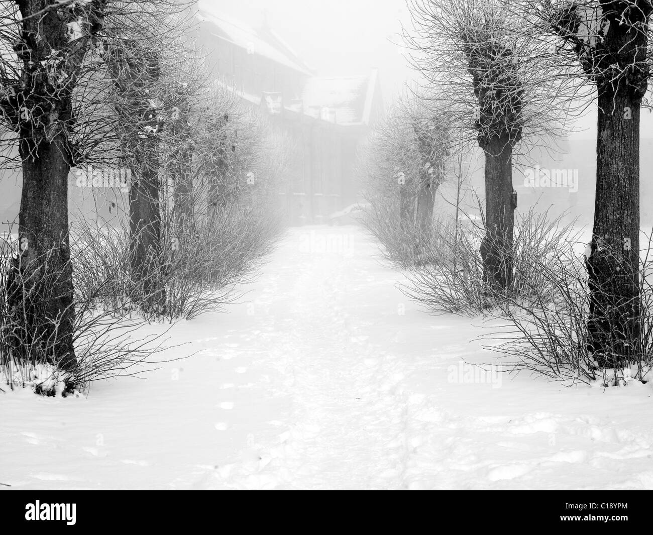 Winter trees in the snow. Shaftesbury. Winter. - Stock Image
