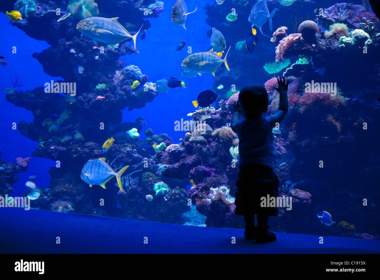 Palma Aquarium Interior With Toddler Looking At Fish Playa De Palma Stock Photo Alamy