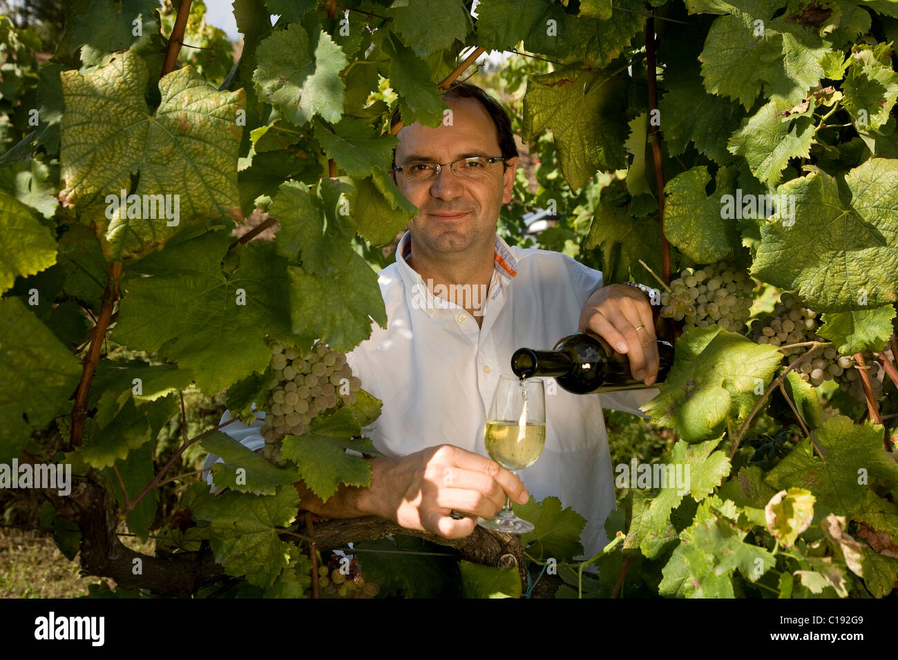 Oenologist Jorge Sousa Pinto in the vineyard of Quinta de Carapeços near the village of Amarante, Porto area - Stock Image
