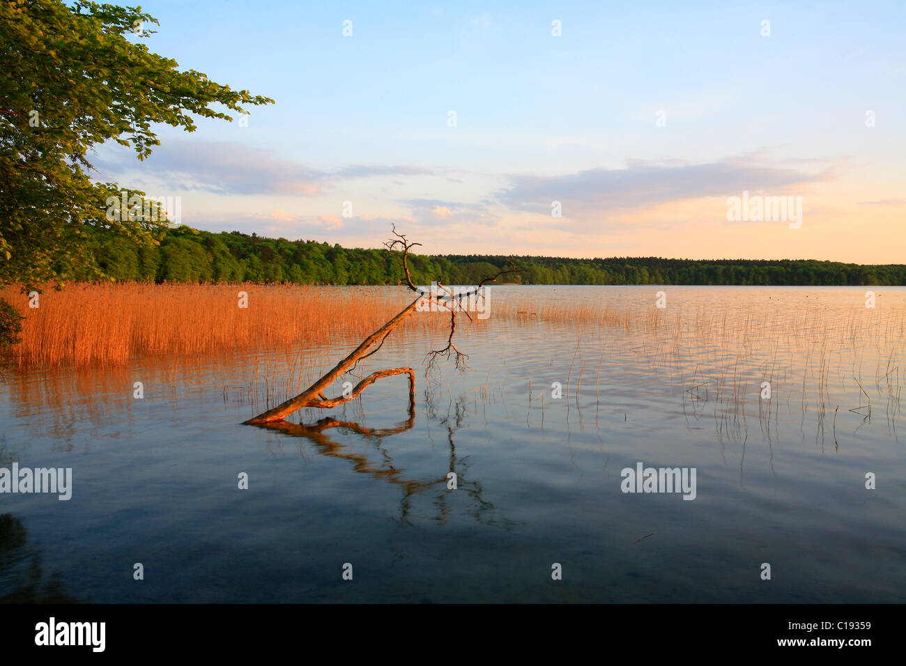 Evening mood on the Lake Grosser Stechlinsee, one of the cleanest and clearest lakes in north Germany, Ruppiner - Stock Image