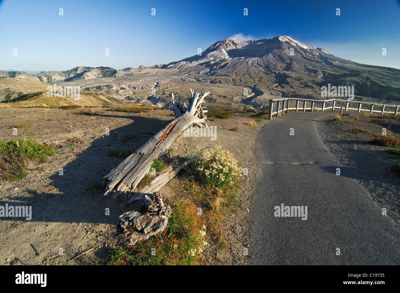 Tree stump dismantled by a volcanic eruption induced pressure wave next to a trail, smoking lava dome at back, National - Stock Image