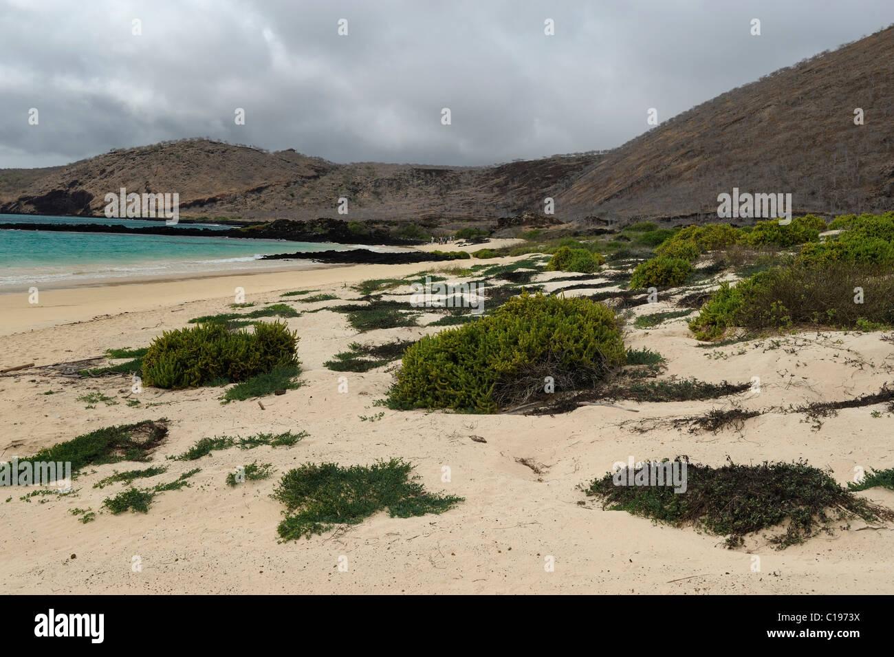White sandy beach on the eastern side of Punta Cormoran, where Green Sea Turtles prefer to nest, Floreana Island, Stock Photo