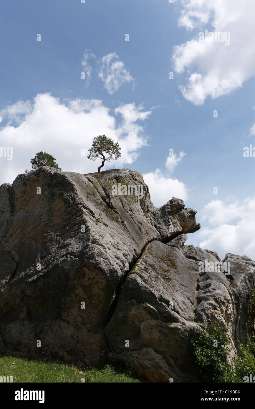 Rocks from the Late Triassic period with a pine tree in Altenstein, Hass Mountains, Lower Franconia, Bavaria, Germany, - Stock Image