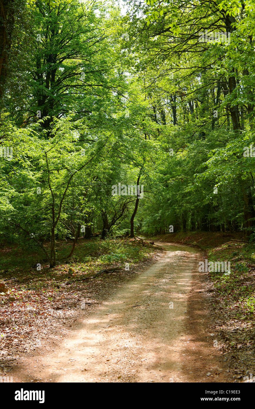 The Ancient protected sub- Mediterranean broad leaved deciduous forest of Tramutana, Cres Island, Croatia - Stock Image