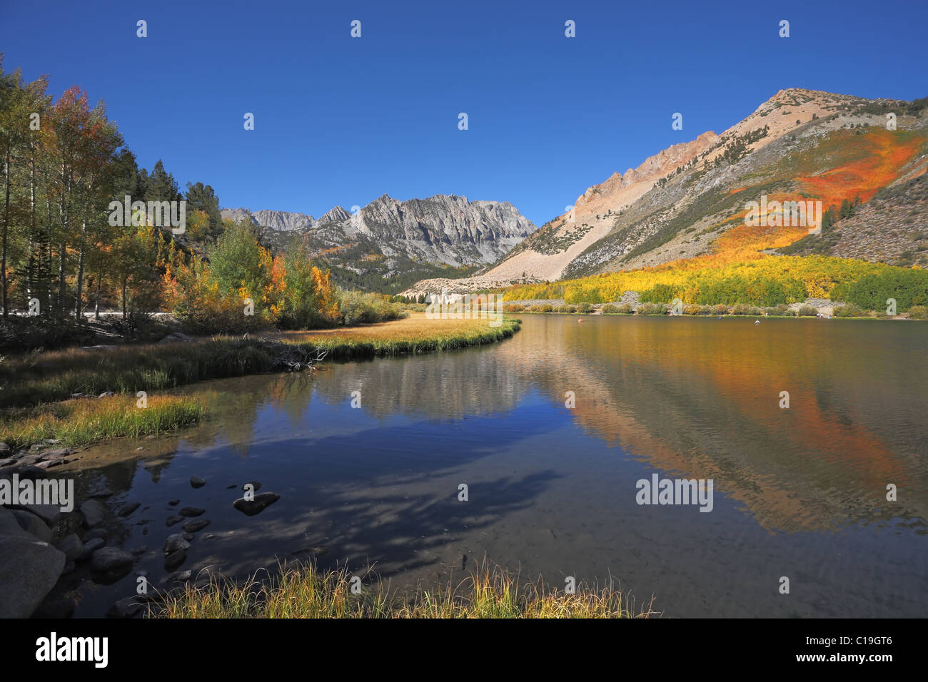 Mountains covered with orange and yellow bushes - Stock Image