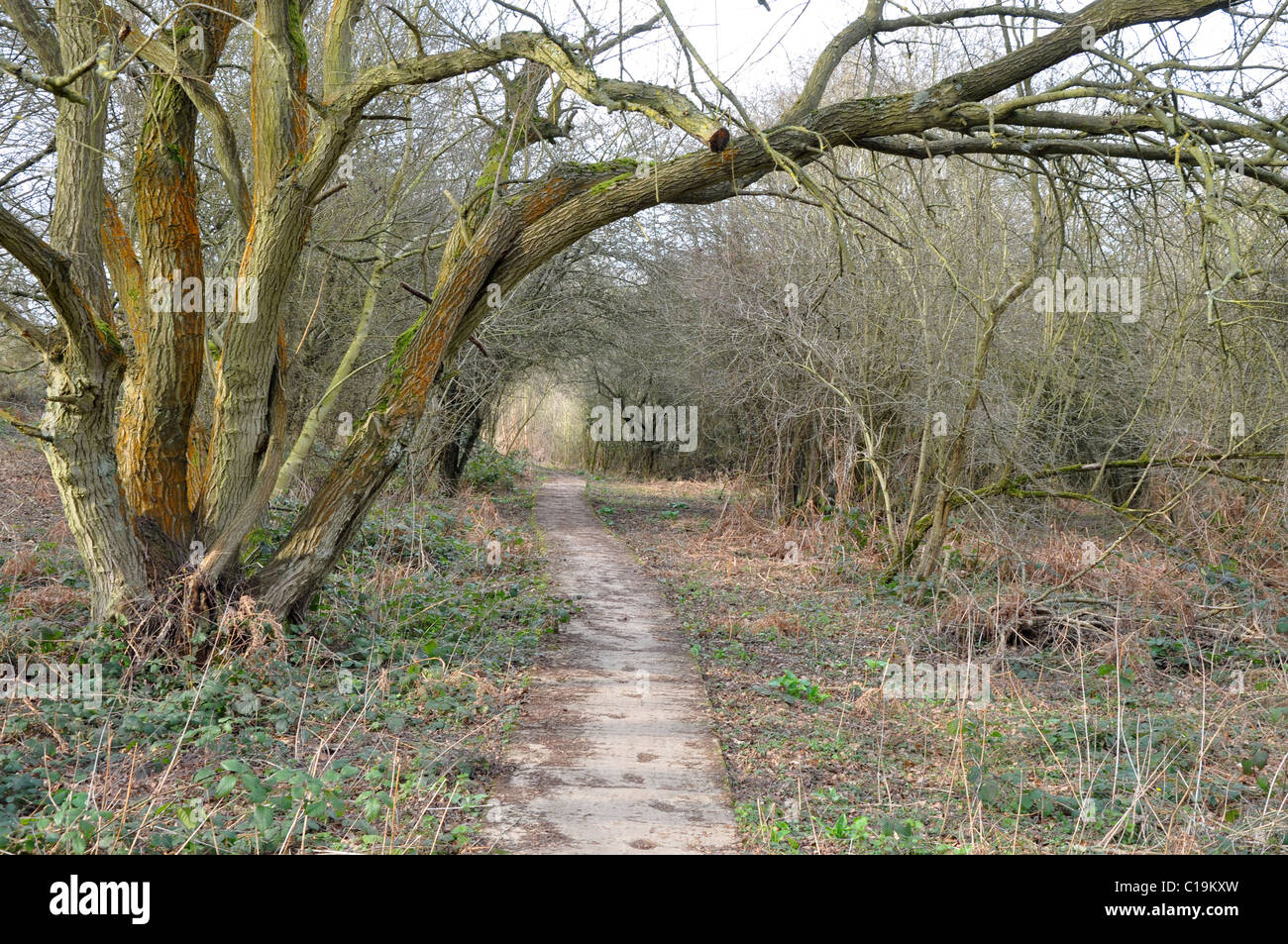 Countryside walk in North Leigh, near Witney, Oxfordshire - Stock Image