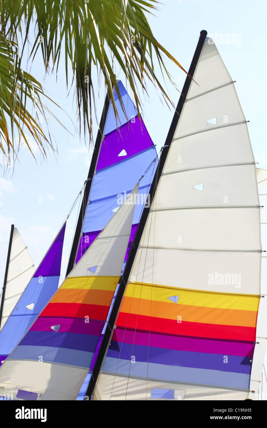 hobie cat colorful sails palm tree leaf summer sport vacation - Stock Image