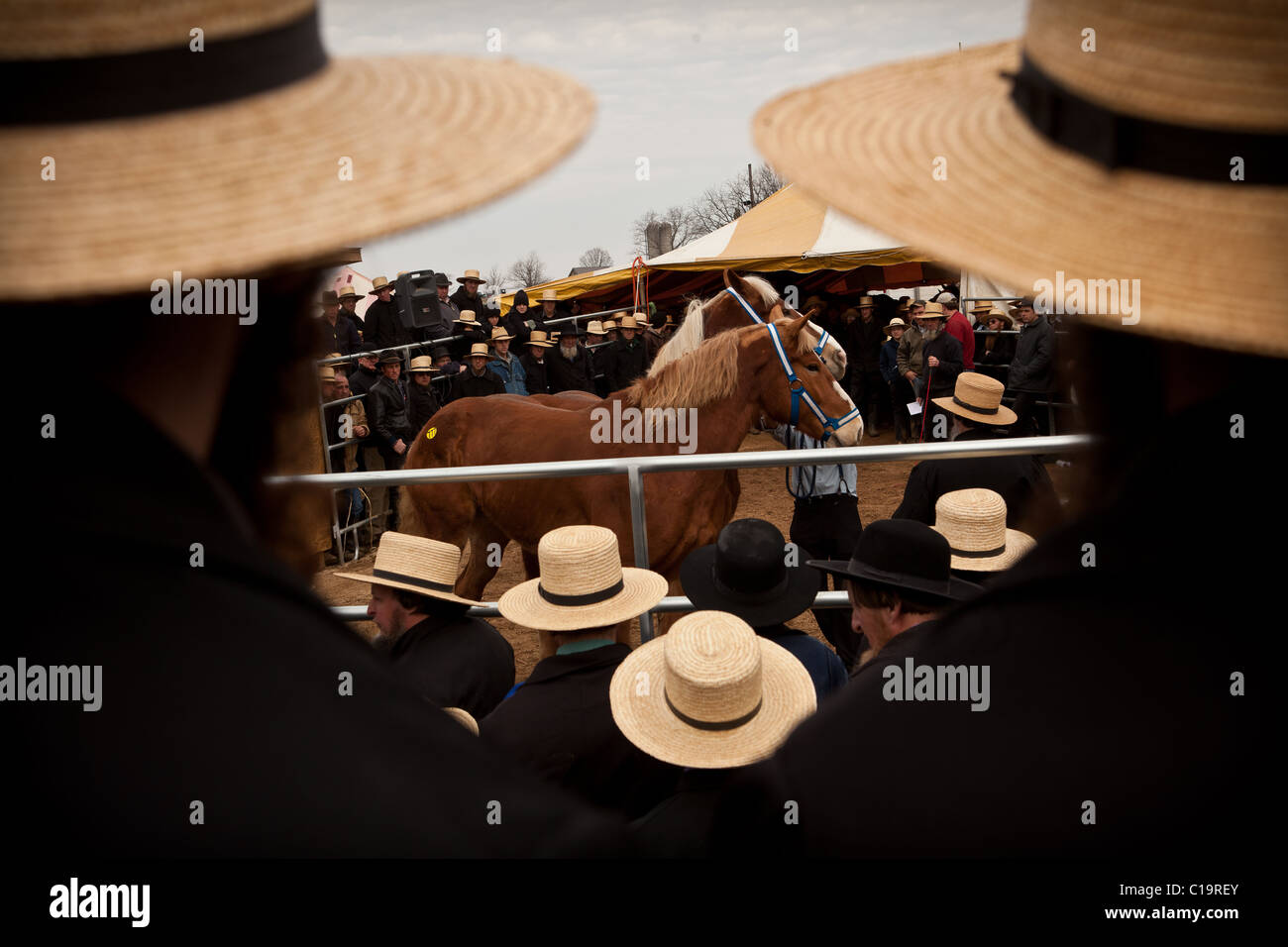 Amish men watch the horse auction during the Annual Mud Sale to support the Fire Department March 12 in Gordonville, Stock Photo