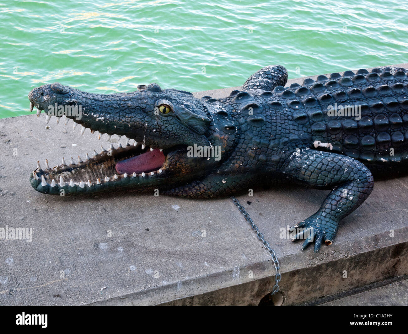 Alligator climbed onto the balcony of the second floor of a residential building 56