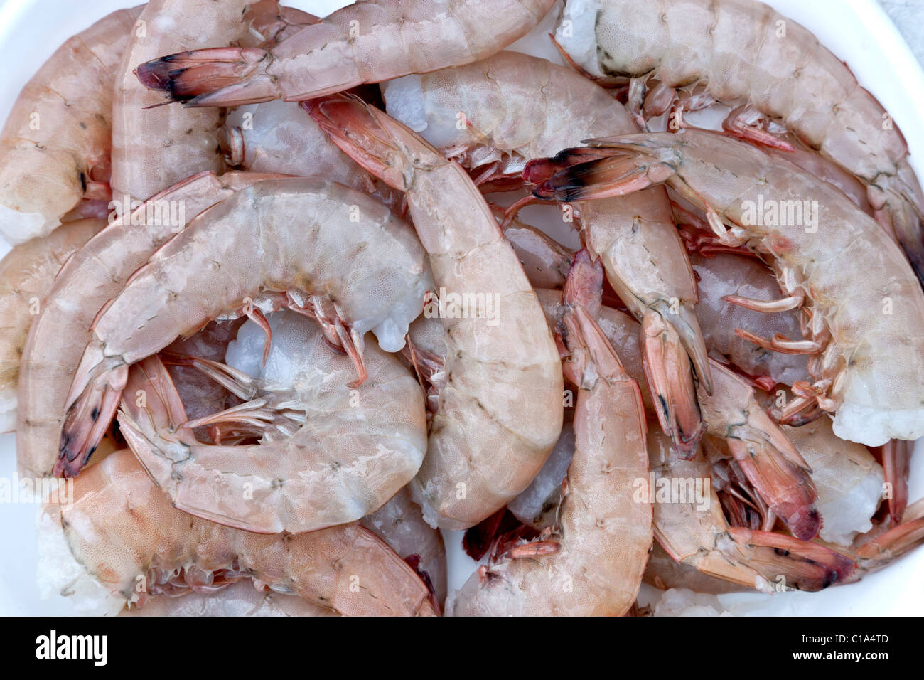 Brown Gulf Shrimp, fresh catch, - Stock Image