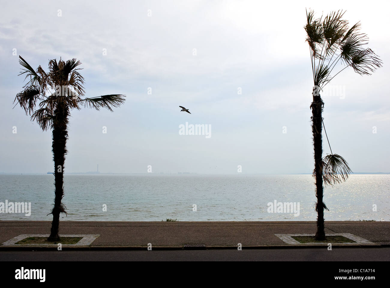 A seagull flying between two stunted palm trees on Southend seafront.  Photograph by Gordon Scammell - Stock Image