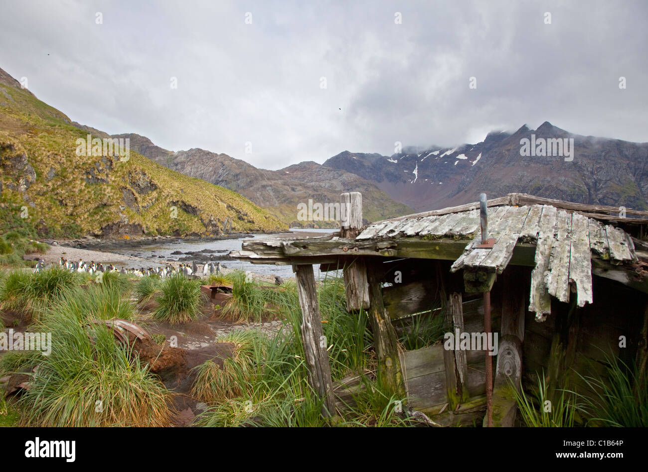 Shipwrecks and remains of the old Whaling Station at Godthul, South Georgia - Stock Image
