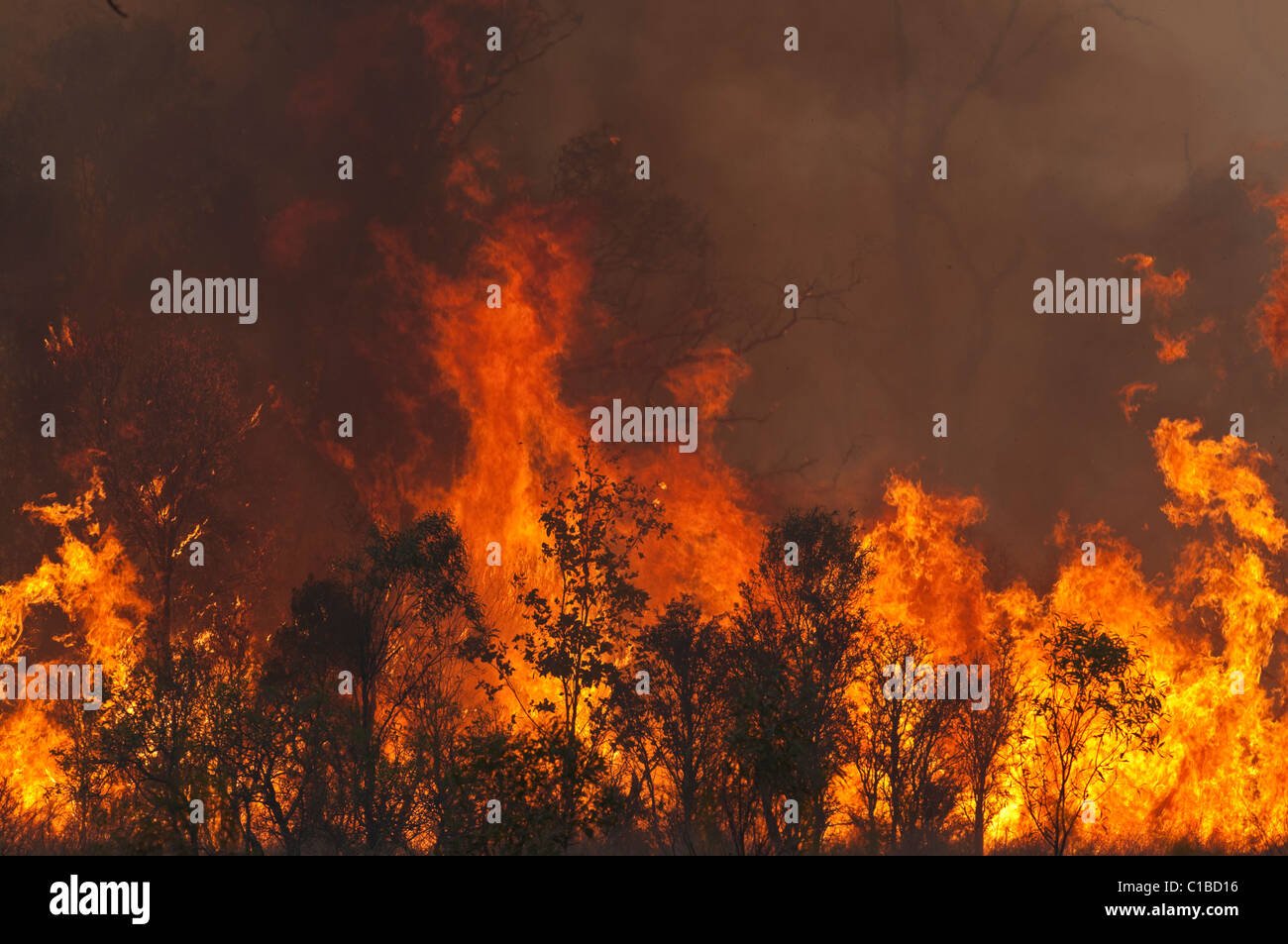 Bush fire in Queensland Austtralia - Stock Image
