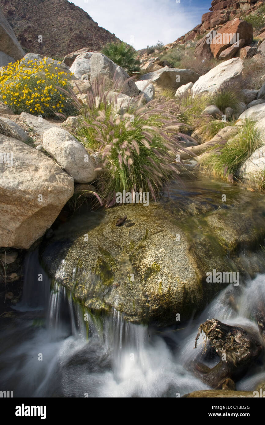 Stream running through Palm Canyon in Anza Borrego Desert State Park, California. - Stock Image