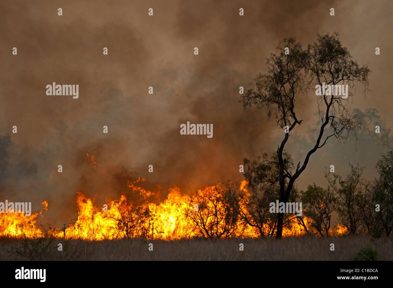 Bush fire near Charter Towers Queensland Australia October - Stock Image