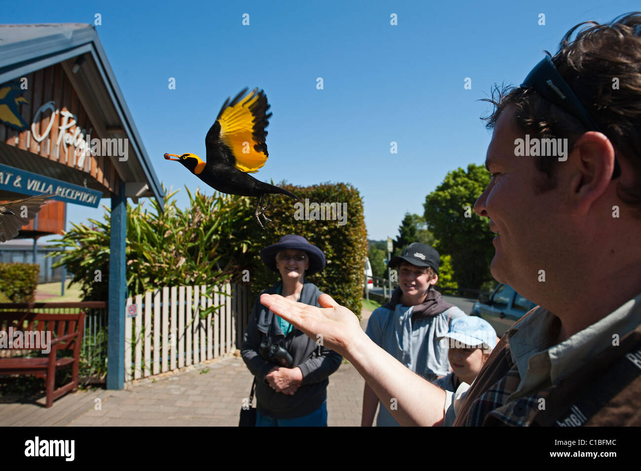O'reilly's, Queensland Stock Photos & O'reilly's, Queensland