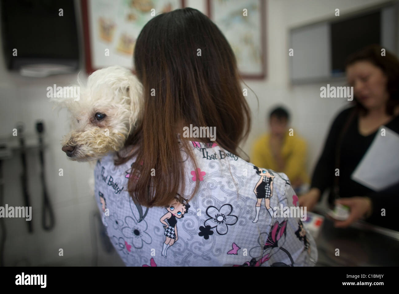 A veterinarian holds a Poodle dog as she speaks with its owners at a Pet Hospital in Condesa, Mexico City, Mexico - Stock Image