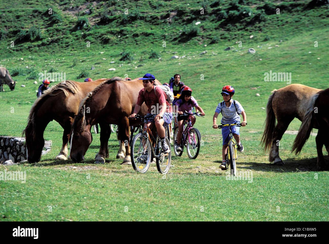 France, Hautes Pyrenees, horsES near the Aspin pasS Stock Photo